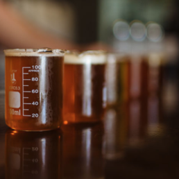 Picture of pints of beer