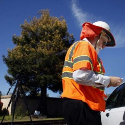 Cotati's citizens save the Albino Redwood link