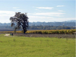 Picture of hiking trail through vineyard